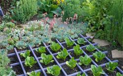 На маленьком участке - большой урожай