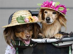 Собачьи моды