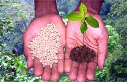 Фуролан увеличивает урожай