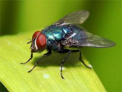 Против мух и комаров - без химии