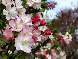Календарь садовода: май