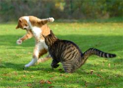 Если ваши кошки дерутся