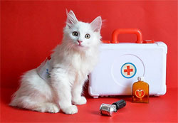 http://umeha.3dn.ru/990/doc-cat-160416.jpg