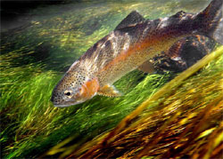 Как почувствовать себя на рыбалке, будто рыба в воде? Про форель