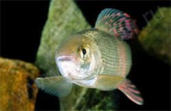 Как почувствовать себя на рыбалке, будто рыба в воде? Про хариуса