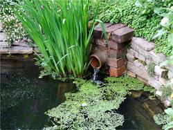 Садово-огородные микрозаметки