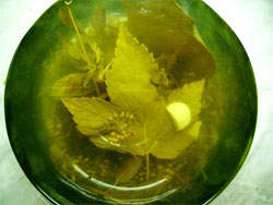 Огуречный рассол - пища и лекарство