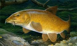 Как почувствовать себя на рыбалке, будто рыба в воде? Про усача