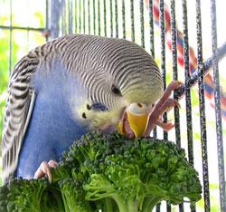 Не кормите попугая петрушкой