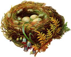 Чье гнездо?
