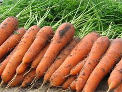 Сщхранить витамины до весны