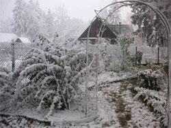 Календарь садовода: ноябрь - декабрь