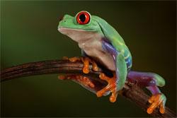 Лягушка, которая живет на дереве