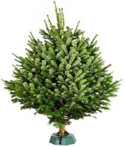 Как установить новогоднюю елку