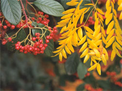 Календарь садовода: октябрь - ноябрь