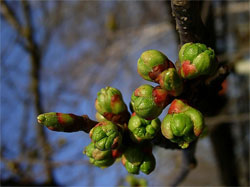 В сад пришла весна: Весенние работы от снега до распускания почек