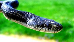 Берегите змей