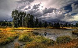 Зыбкая почва болота