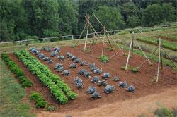 Садовый участок на торфяниках