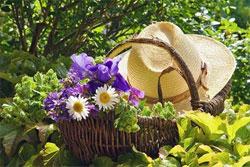 Календарь садовода: июнь