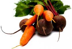 Вредители моркови и свеклы