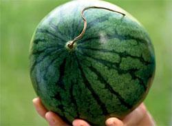 Какой арбуз спелый?