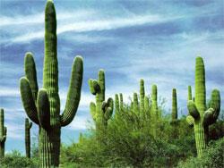 Не слишком известные сведения о кактусах