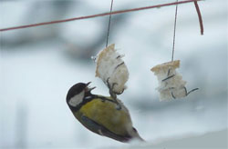 Как мы кормим зимой птиц
