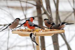 Птицы - наши друзья