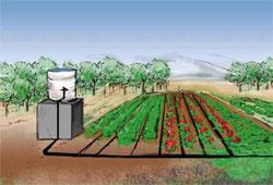 Как полить огород?