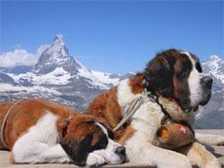 Святые собаки