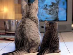 Домашние животные и телевизор