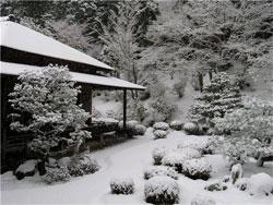 Чем заняться садоводу в январе