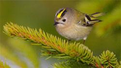 Чем кормить комнатных птиц