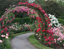 Как можно красиво посадить цветы в саду