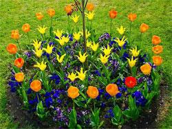 Как сделать красивую цветочную композицию на своём дачном участке