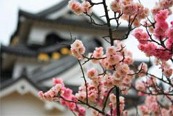 История развития садово-паркового искусства Японии