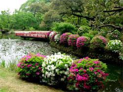 Растения в японском саду: Кустарники