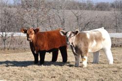 Календарь животновода - Весна - Март