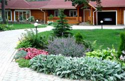 Растения и цветы многолетники для миксбордера