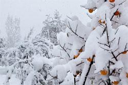 Защита садовых деревьев от мороза