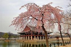 Растения в японском саду: Правильный подбор растений