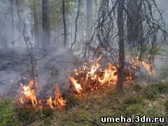 Пожар в лесу. Что делать?