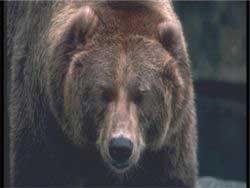 Челябинские туристы в Польше избили медведя до потери сознания
