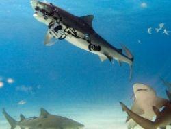 """Акула-гопник """"отжала"""" камеру у дайвера"""