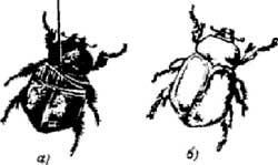 Металлизация растений, насекомых и других неметаллических предметов