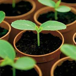 Выращивание рассады в отходах полиэтиленовых труб