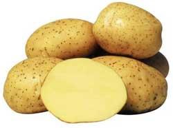 Выращивание картофеля, выращивание раннего картофеля