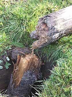 Как сделать, чтобы деревянные столбы быстро не гнили