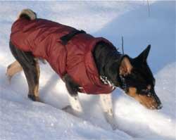 Попонка (комбинезон) для собаки